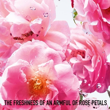 Rose N